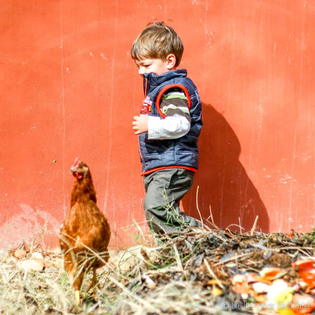 a brown hen in front of a little boy