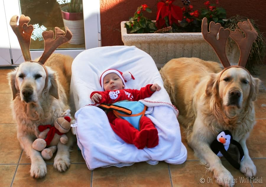 A baby dressed as Santa Claus in a bouncer seat with 2 golden retrievers wearing reindeer antlers, one on each side of him.
