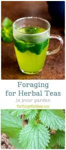 photos of nettle tea and stinging nettle plants