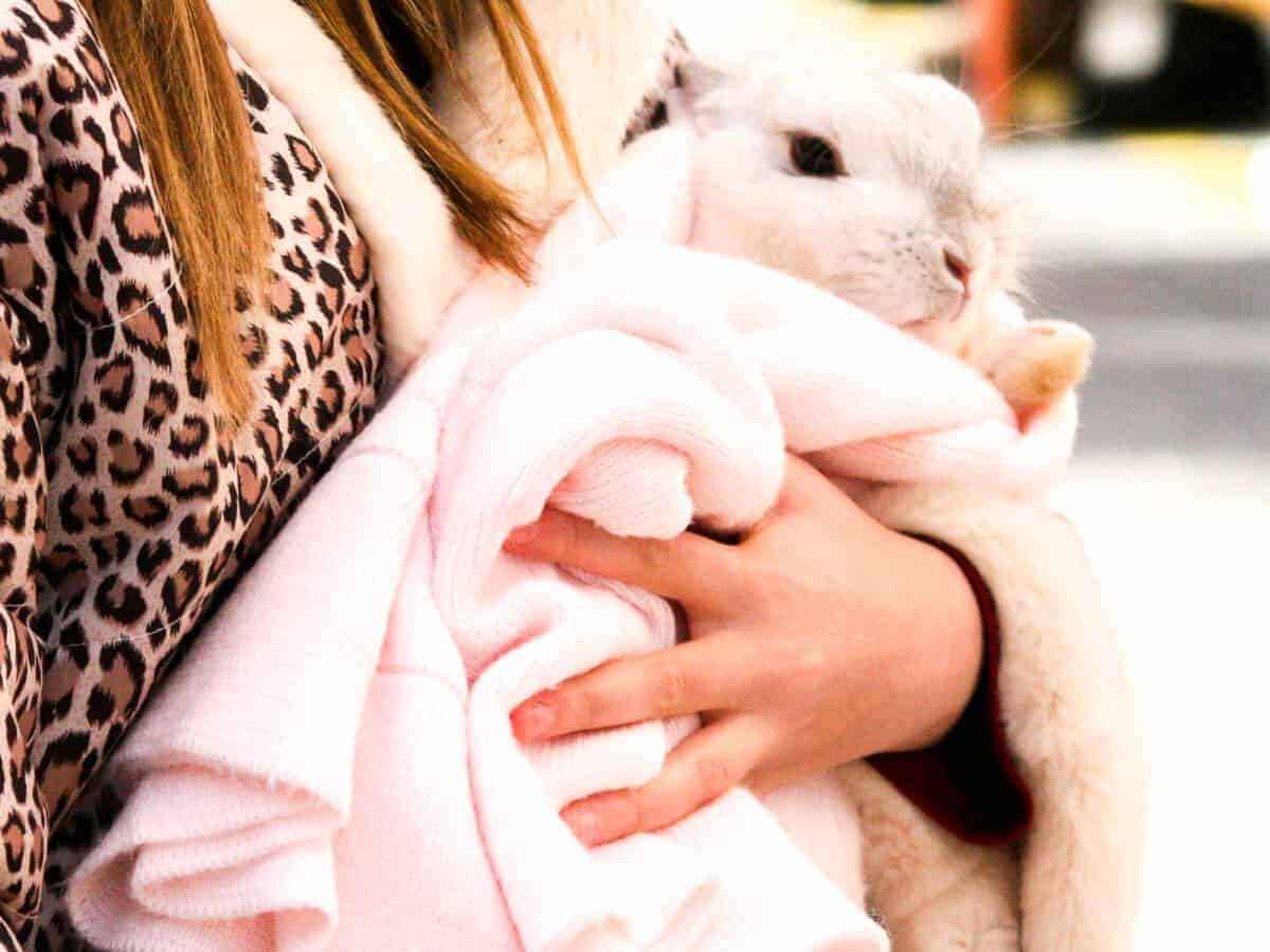A rabbit covered in pink blanket held by a woman wearing an animal print jacket.