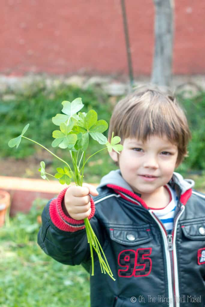 A young boy holding a bunch of clovers in his hand, ready to use them for a fun St. Patrick's Day project.