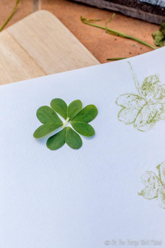 4 clover leaves together on absorbent paper, forming a 4 leaf clover pattern.