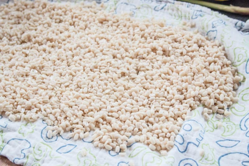 Peeled urids for homemade papadums
