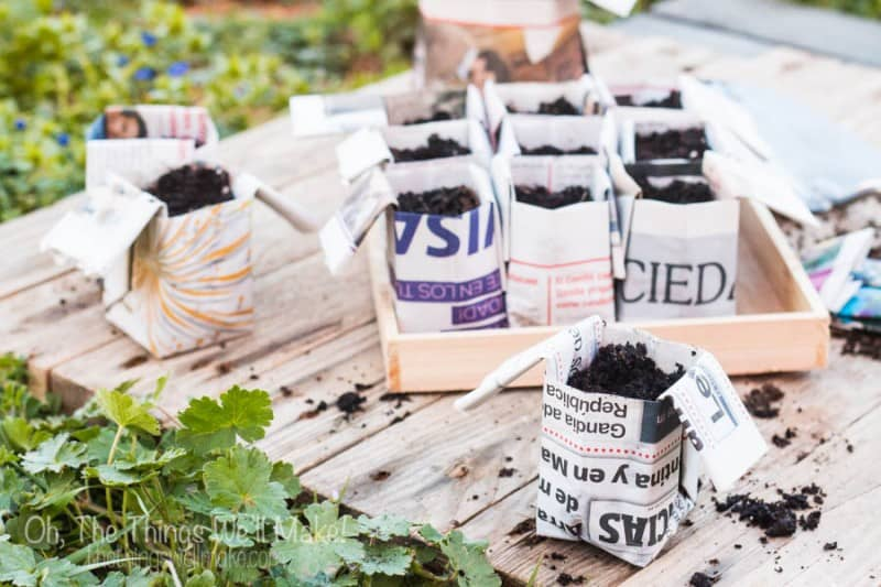 Make your own DIY origami newspaper pots for seedlings. Recycle your newspapers into biodegradable pots that can be planted with your seedlings., thereby protecting the fragile roots of your precious plants!