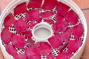Overhead view of slices of beetroot on a dehydrator tray.