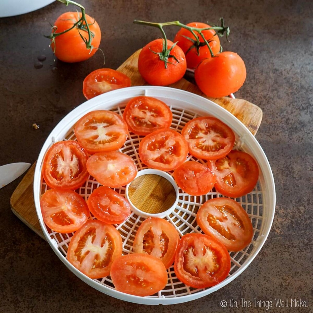 Sliced tomatoes on a food dehydrator tray