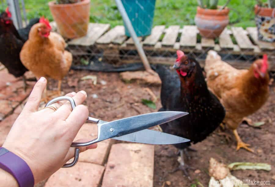 How to Clip a Chicken's Wings to Prevent Flying Away - Oh