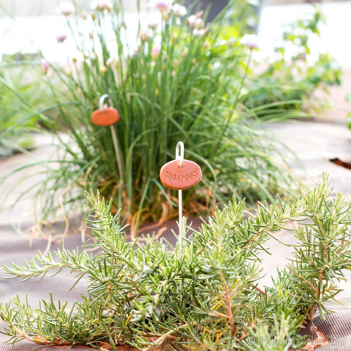 "A closeup of a rosemary plant with a faux terra cotta garden marker with the word ""rosemary"" written on it. In the background, a chive plant also has a similar garden marker."