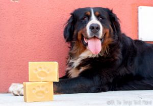 How to Make a Homemade Dog Shampoo Bar Soap