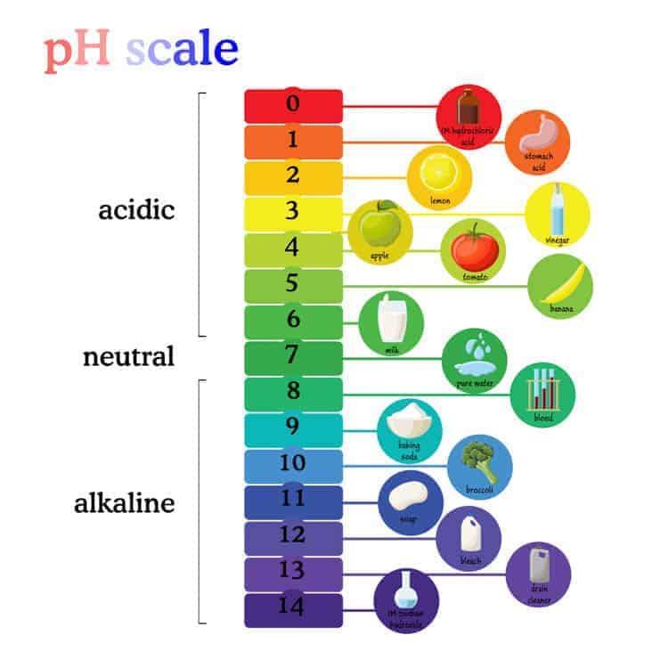 A photo of a pH scale with acidic products at the top and alkaline products at the bottom.