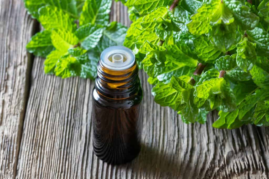 An amber bottle of peppermint essential oil in front of a group of peppermint leaves.