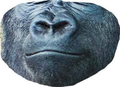 Bottom half of a gorilla face