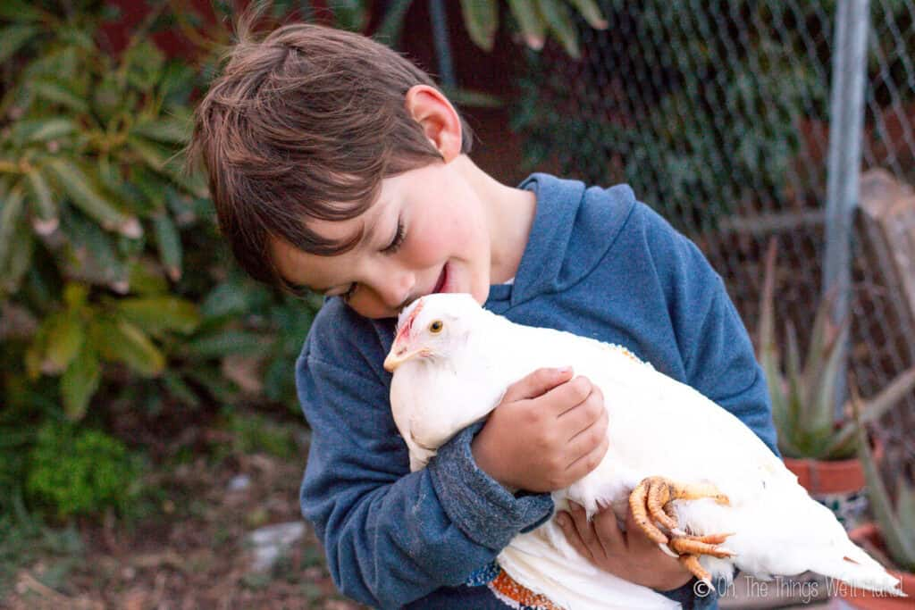 A boy holding a young white hen