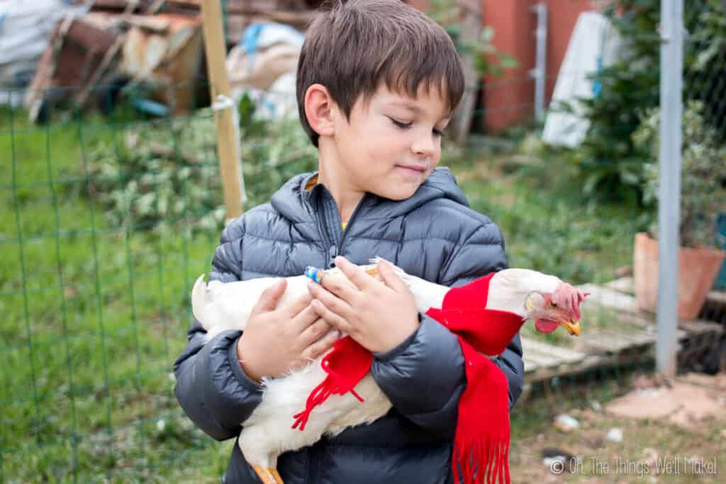 A boy holding a white hen with a scarf on