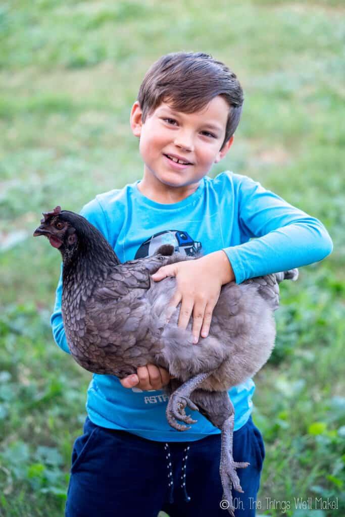 a dark gray hen