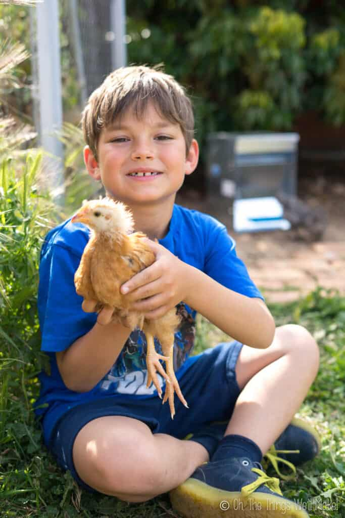 A boy holding a brown chick