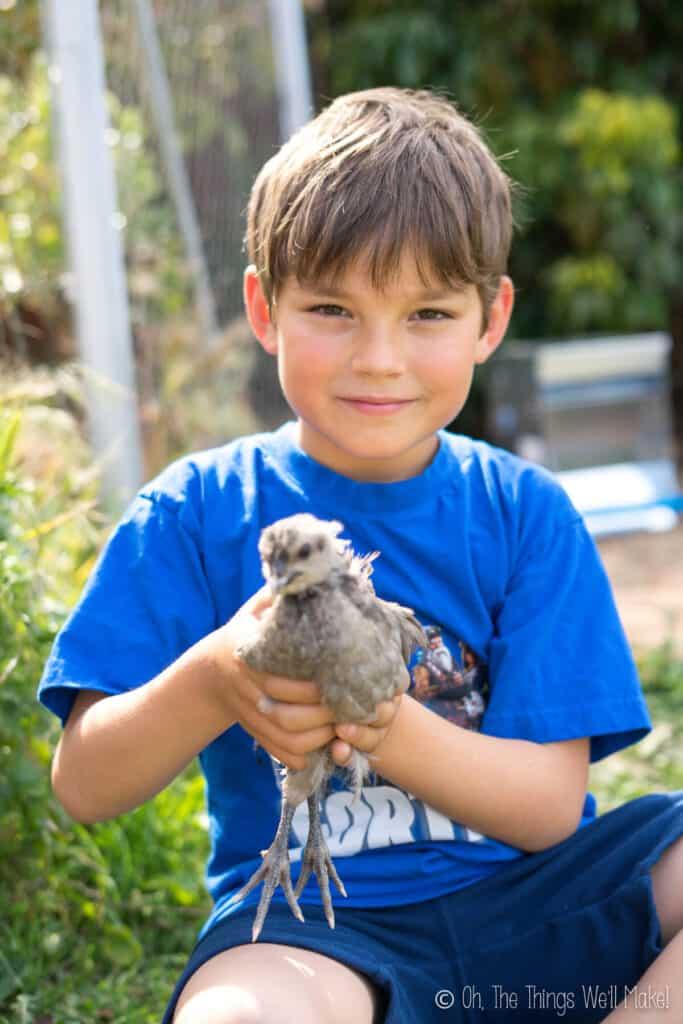 A boy holding a light gray chick