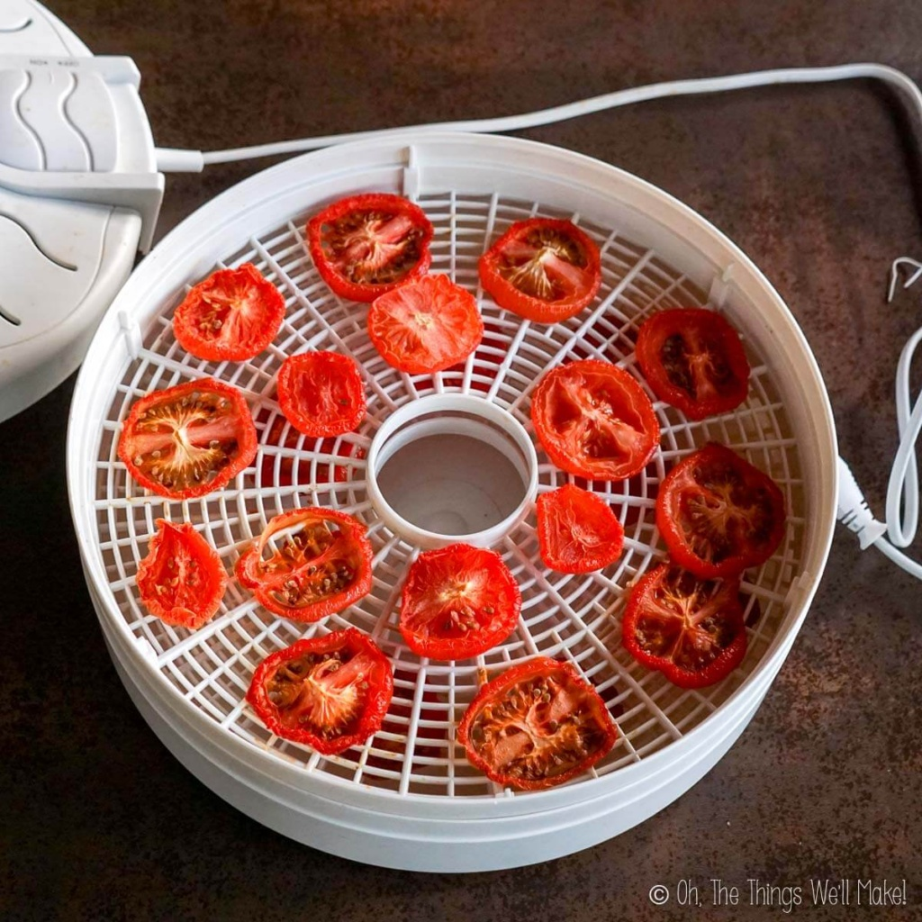 Overhead view of sliced tomatoes on a food dehydrator tray almost fully dried.