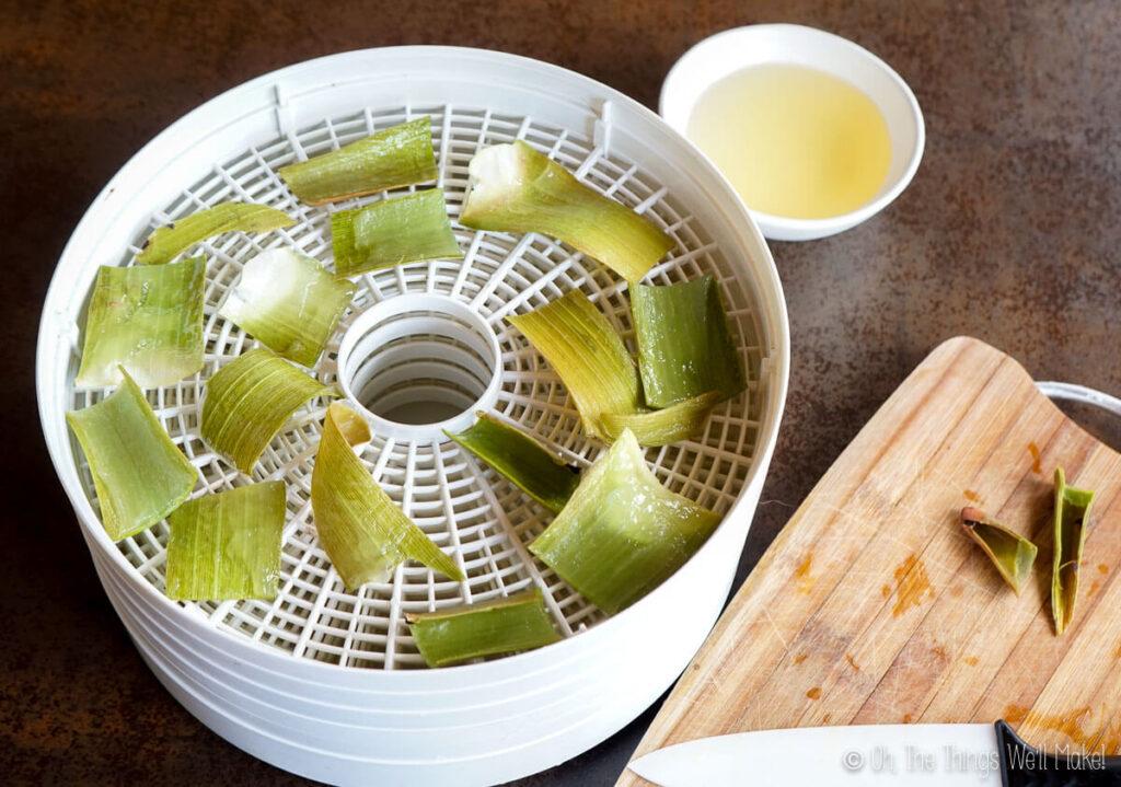 Fresh aloe leaf pieces in a food dehydrator