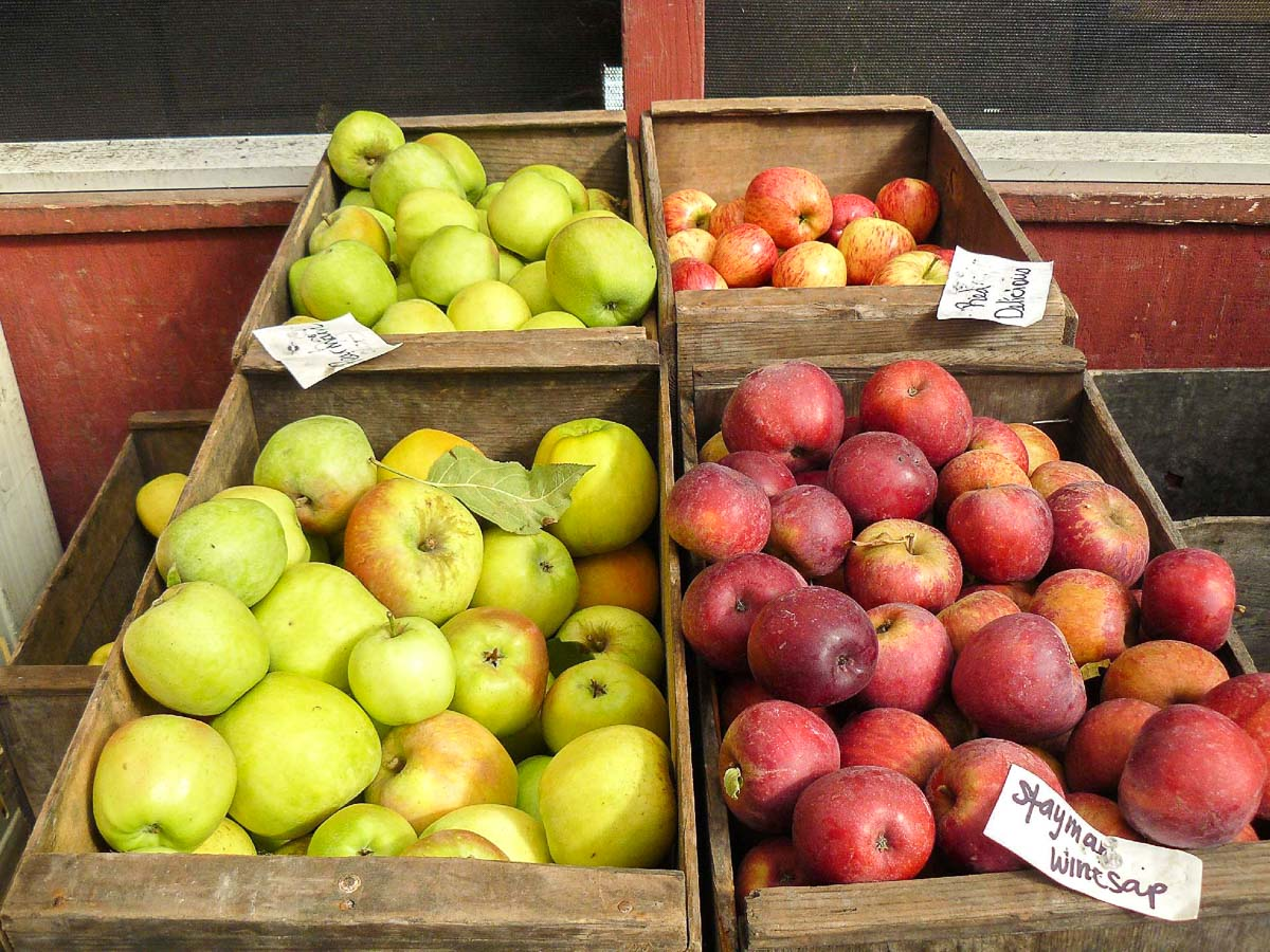 4 baskets full of different varieties of apples